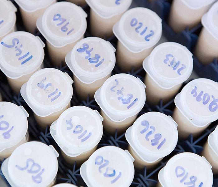 High throughput milk testing