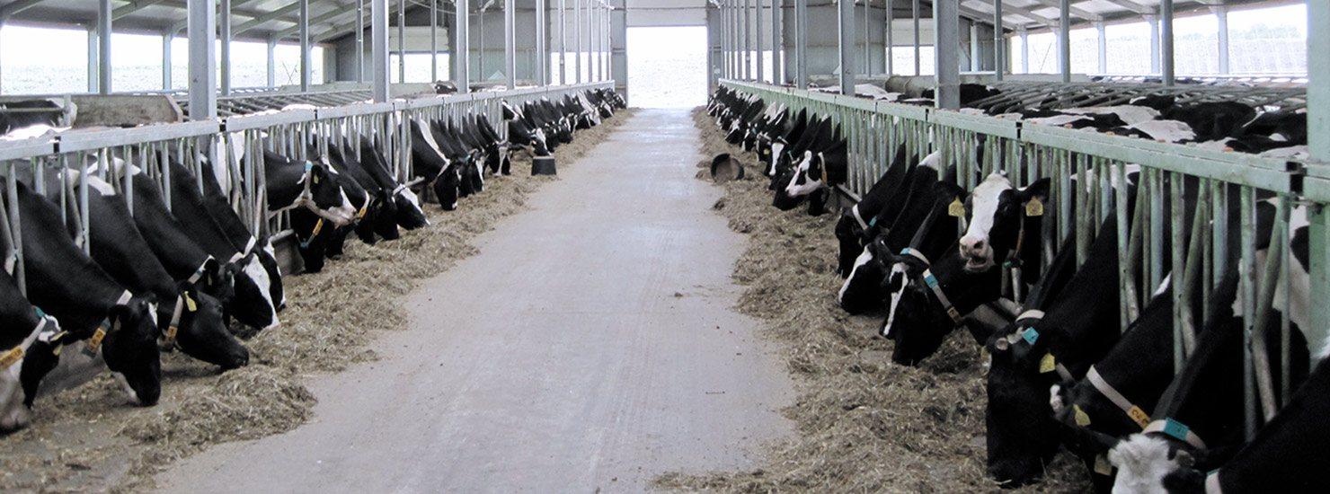 Milk testing for mastitis detection in dairy herds