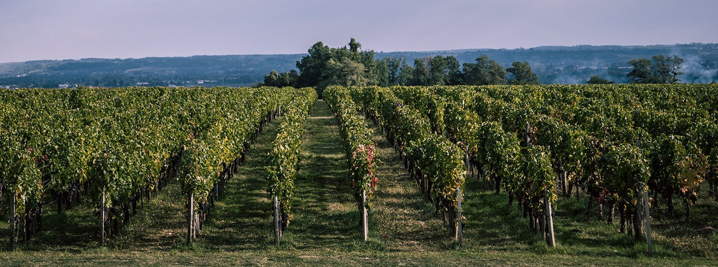 Vineyard near Bordeaux